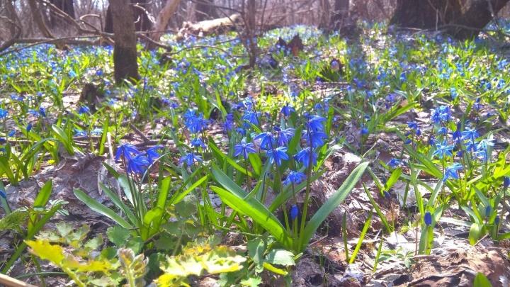 В Урюпинске Волгоградской области дождались прихода весны: фоторепортаж
