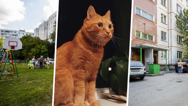 Полиция завела дело о жестоком обращении с животными после расправы с котом Мотей