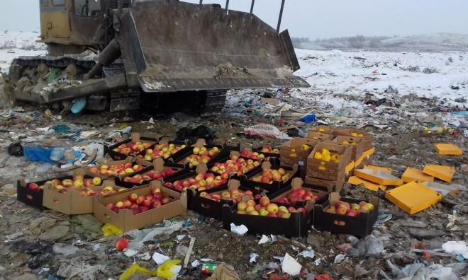 Польские яблоки и болгарские перцы уничтожили на полигоне в Красноярске