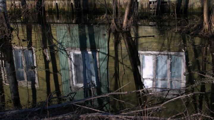 На окраине Архангельска нашли обезображенный труп мужчины