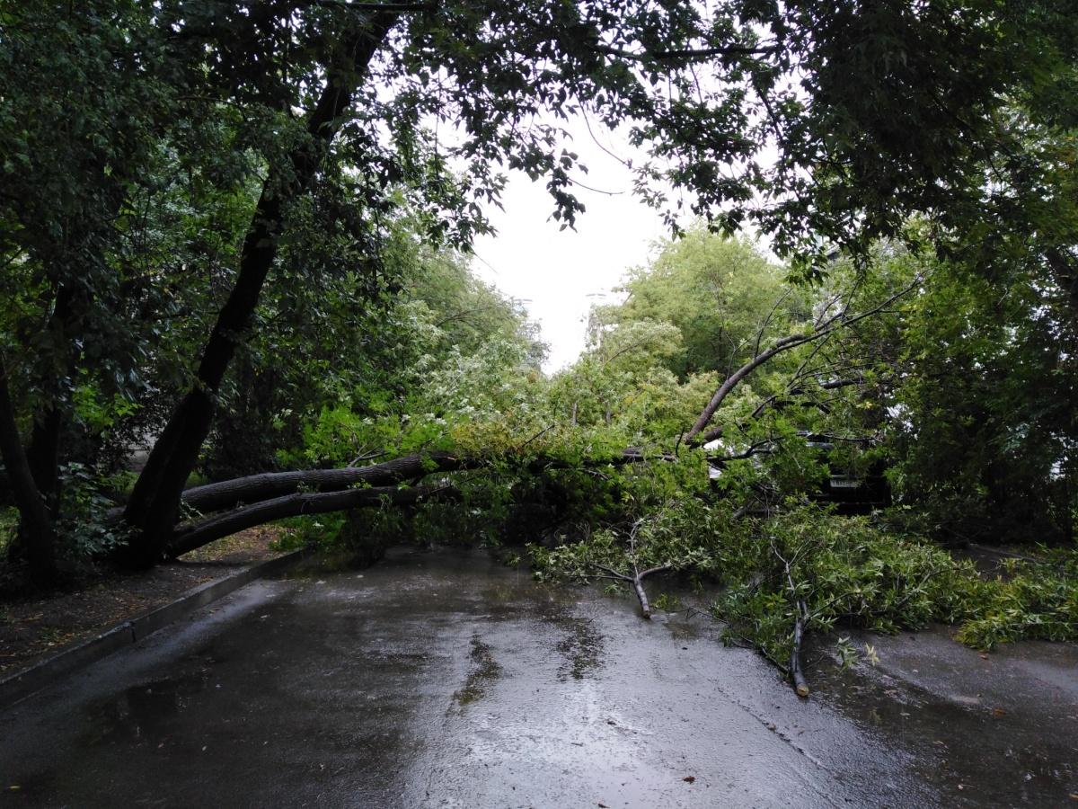 Дерево заблокировало выезд