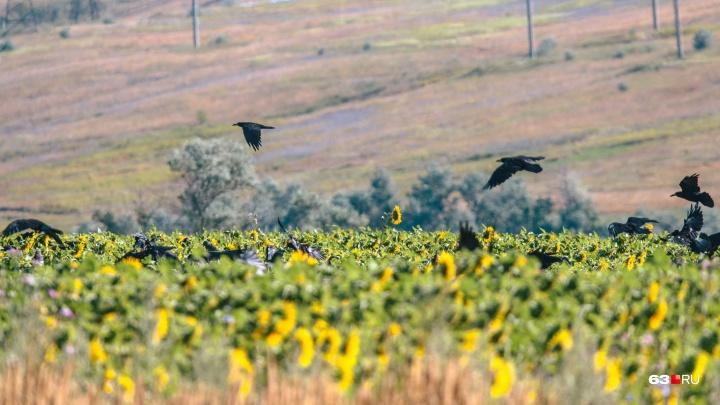 «Землю нужно беречь, как беременную женщину»: в Самарской области снизилось плодородие почвы