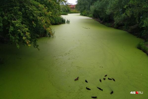 Чтобы можно было начать расчищать русло и восстанавливать водоем, мэрия должна решить вопрос со сбросом загрязненных вод в Битёвку