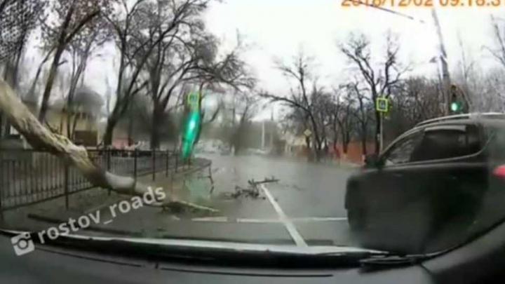 «Повезло так повезло»: в Ростове в метре перед джипом рухнуло дерево
