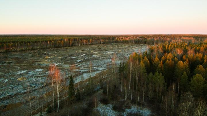«Мусорные» скандалы за год опустили Поморье на семь строчек в «Национальном экологическом рейтинге»