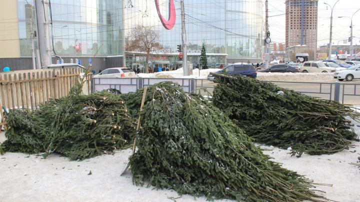 Новосибирцев попросили отдать новогодние ёлки на корм животным