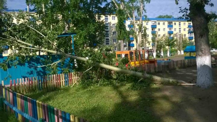 В ветреную погоду воспитанников омского детсада решили не выпускать на улицу из-за опасных деревьев