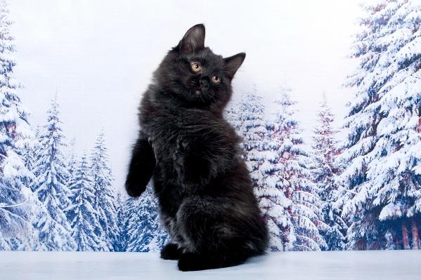 Котенок Архип