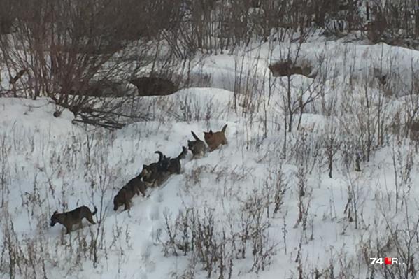Стая бродячих псов ежедневно бегает в парке «Плодушка» и пугает жителей Ленинского района