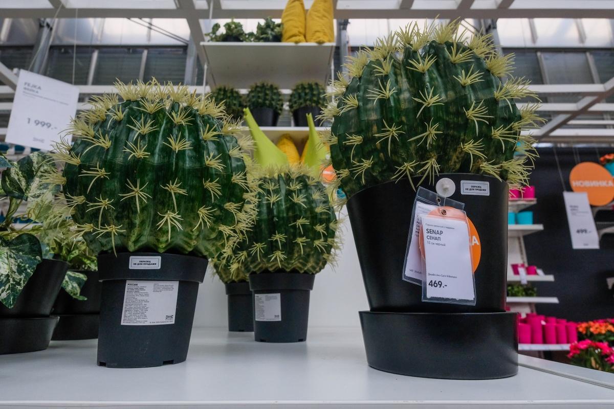 Искусственные кактусы в ИКЕА