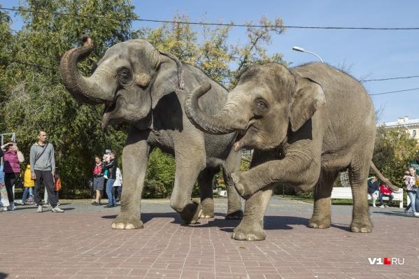 Слоны устроили представление в центре парка