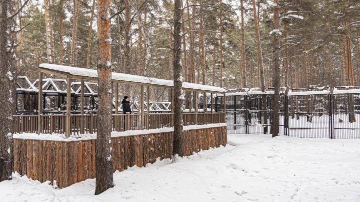 В зоопарке появились смотровые площадки для наблюдения за оленями— на них потратили миллион