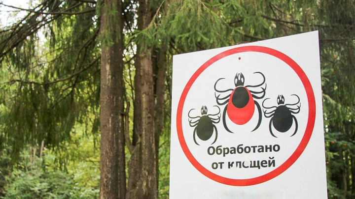 Пермские леса и парки начнут обрабатывать от клещей во второй половине апреля
