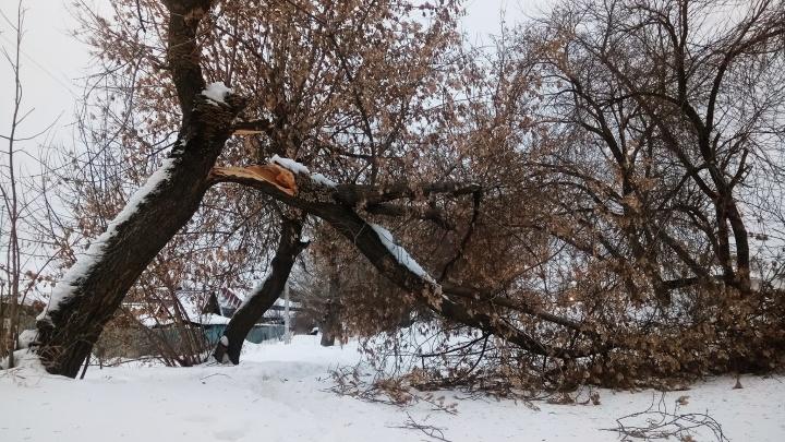Валит деревья и обрывает провода: по Новосибирску пронёсся сильный ветер