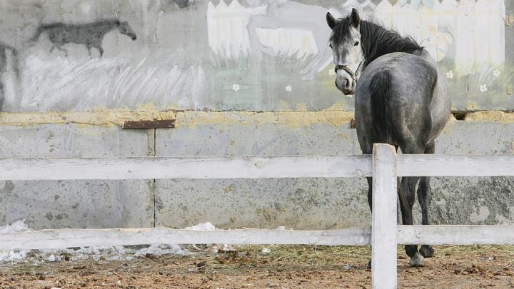 В Зауралье полиция нашла похищенную тройку лошадей и вернула их хозяину