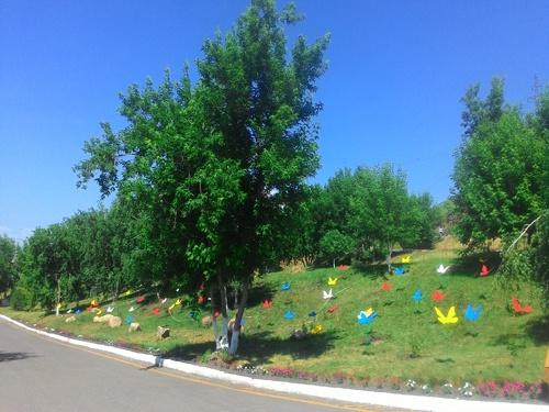 Территорию около завода на правобережье засадили розами