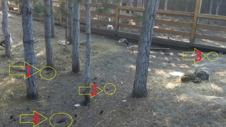 Курганец выложил в соцсетях фото разбросанных по контактному зоопарку останков животных