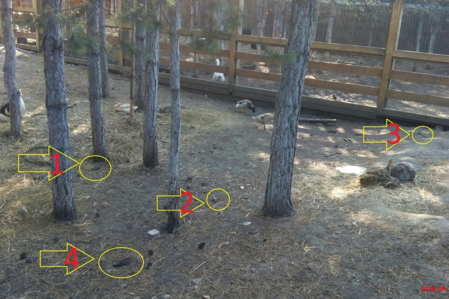Очевидец отметил на фото места, где разбросаны останки