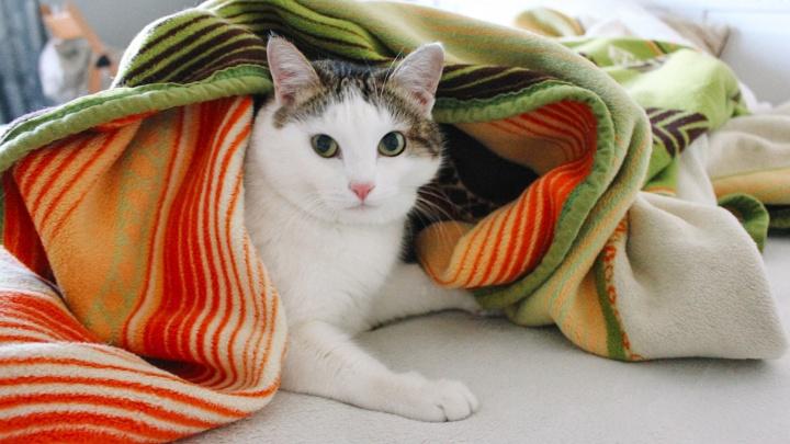 В домах Кургана должно стать тепло до конца недели