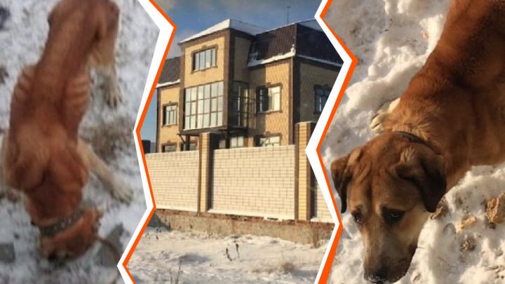 Остались одни кости да кожа: тюменцы вызвали полицию, чтобы спасти изголодавшегося пса