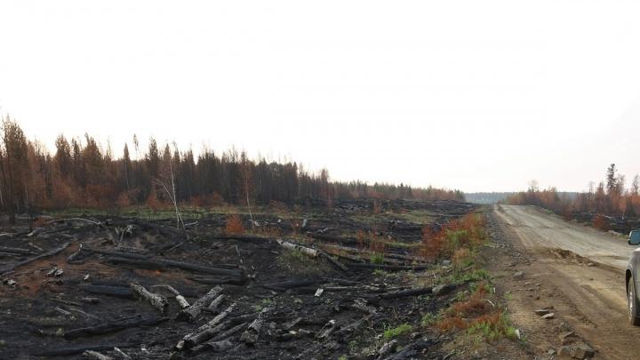Заготовителя леса в Богучанском районе поймали на «плохой противопожарной подготовке»
