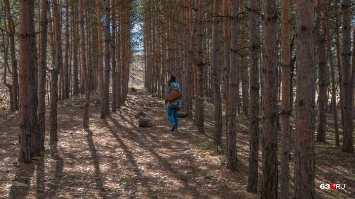 В лесах — опасные болезни: самарцев просят сообщать о подозрительных животных на природе