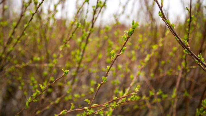 Прогноз погоды на март: в Красноярск приходит настоящая весна
