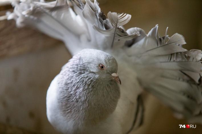 Птицы не идут на руки, но фотографируются с удовольствием