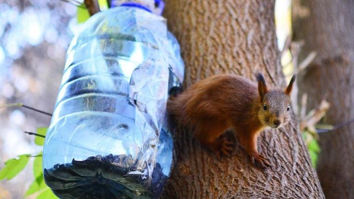 Молодые грызуны заполнили леса Академгородка в поисках жилья
