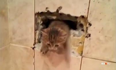 Котенок вылез навстречу спасателю