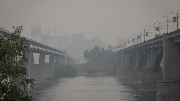 Ромашка против смога: врачи рассказали, как поправить здоровье послегустой дымки над Новосибирском
