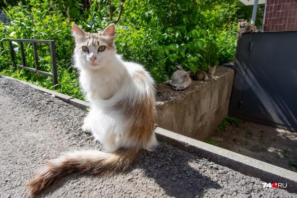 Врачей и кошек в этом микрорайоне больше, чем в среднем по Челябинску