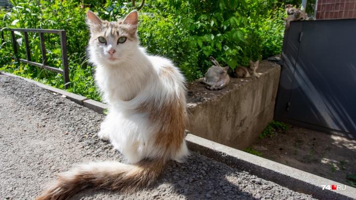 Микрорайон врачей и кошек: 74.ru отправился на улицу Медгородок
