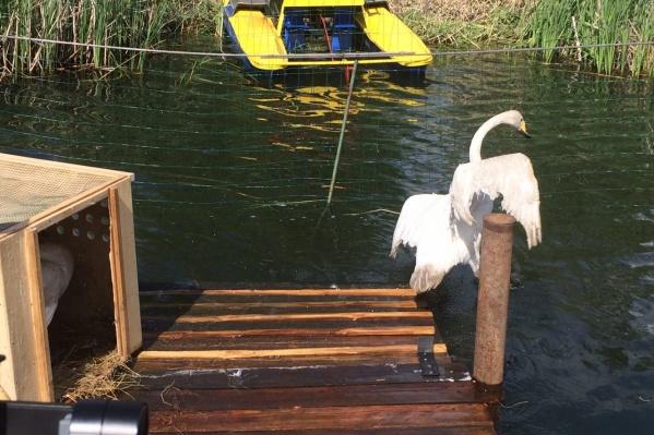 В этом озере птицам будет удобнее