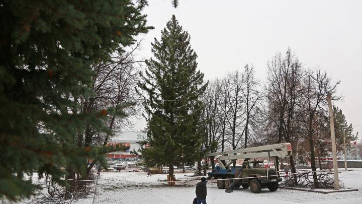Праздник к нам приходит: в Уфе установили 34-метровую живую ель