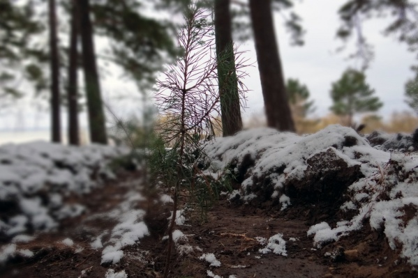 Деревья появились возле санатория «Золотой берег»