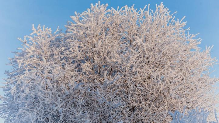 Возможны перебои с электричеством: МЧС предупреждает о сильной изморози и гололеде в Прикамье