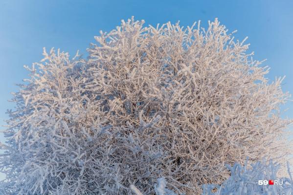Под тяжестью намерзшего снега ломаются ветки и рвутся провода
