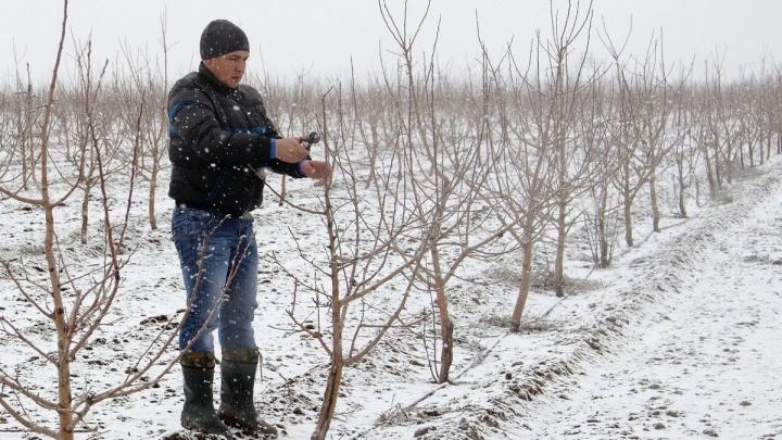 «Сады Придонья» применили новые агротехнологии