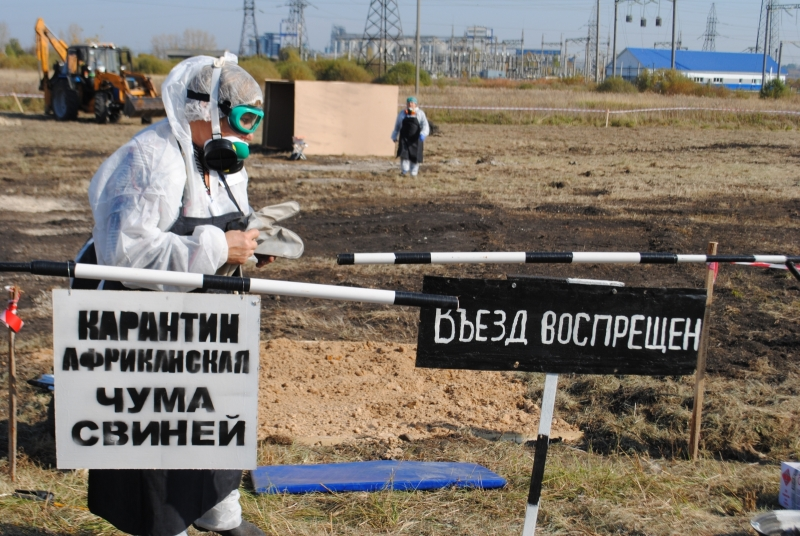 Пофакту вспышки АЧС вТюменской области возбудили дело