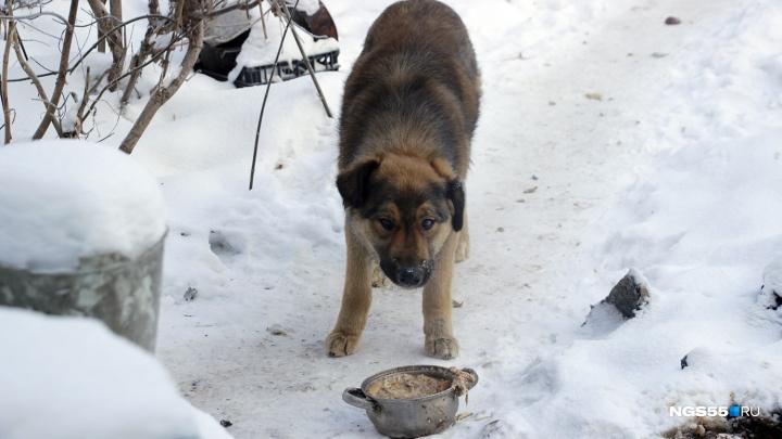 На Ленинском рынке начали собирать корм для бездомных собак