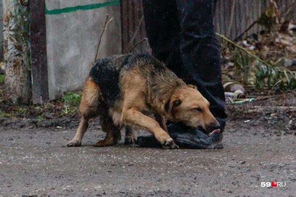 Подросток избил собаку на Гайве в августе 2019 г | 59.ru ...  нередко