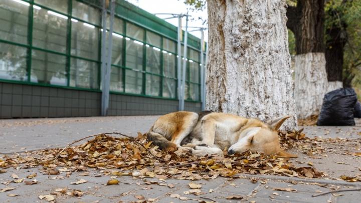 Волгоградская область попрощается с осенью незначительным потеплением: смотрим прогноз