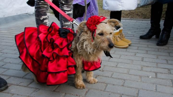 Хот-дог и невеста: по Комсомольскому парку Волгограда прогулялись самые стильные собаки
