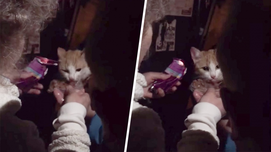 Загнали собаки: в Белорецке пожарные спасли кошку, которая просидела на дереве три дня