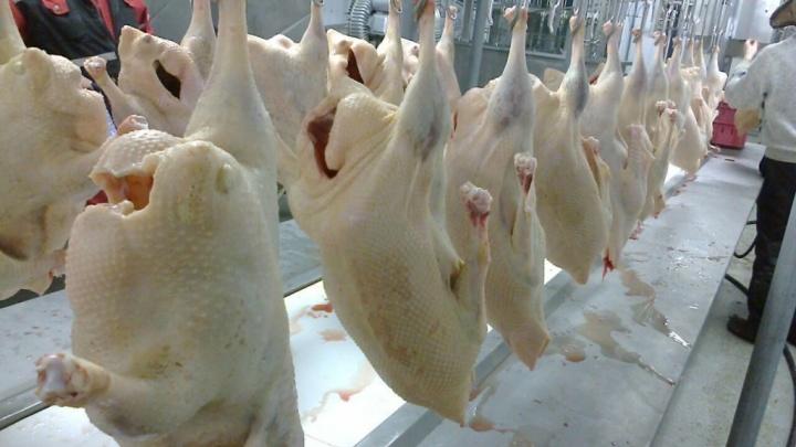 В полуфабрикатах южноуральской птицефабрики нашли опасные бактерии