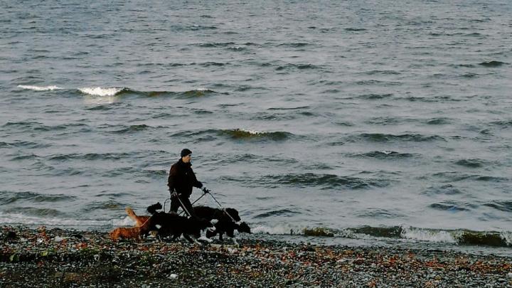 Уральцы, делающие клипы звездам, сняли короткометражку с умилительными собаками. Фото со съемок
