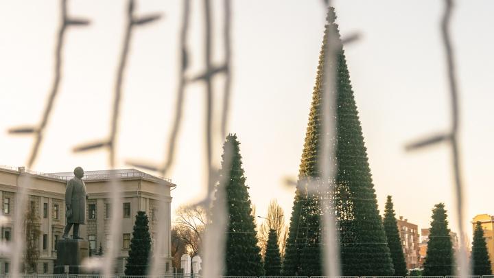 Здравствуй, елка, Новый год: на площади Куйбышева выставили все семь елок