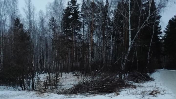«Предотвратить вред людям»: власти Челябинска объяснили вырубку 661 дерева возле «тропы здоровья»