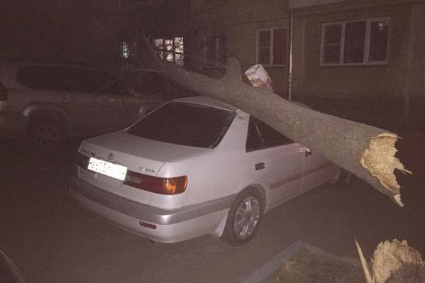 На улице Ватутина дерево разломилось и упало сразу на две припаркованных «Тойоты»